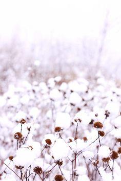 snow felt #Aspesi/fw12-13/mood/women
