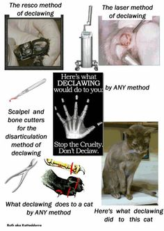 They refuse to change their so-called #declaw policies, their declaw policies are #Worthless Their vets are amputating cats, they do not educate fur parents what declawing really is, amputation of each P3 knuckle bone, leaving kitty to #SufferForLife #AAFP #CatVets #AVMAvets #AVMA #AVMATellTheTruth #AAHA #AAHAHealthyPets #StopDeclawingCats #StopLegalAnimalCruelty #BoycottVetsWhoDeclaw #declawedanddumped #DeclawedCatsAreInConstantPain #GreedOverCompassion