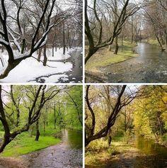 Changing #seasons on my #Nature Environment #Vision Board