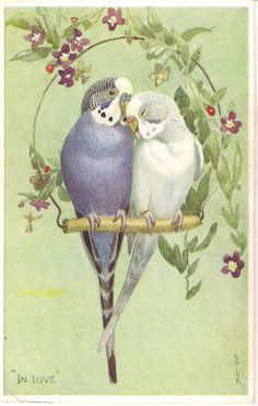 "Lot of 6 Parakeet Vintage Valentine's ""Lovebird"" Postcards Cute Birds, Pretty Birds, Beautiful Birds, Vintage Birds, Vintage Postcards, Vintage Art, Art And Illustration, Illustrations, Budgies"