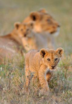 Wildlife photography by Nikolai Zinoviev