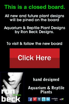 new aquarium plants & reptile plant design board notice: to see the current design board, click here > http://www.pinterest.com/ronbeckdesigns/aquarium-plants-reptile-tank-plants-designed-by-ro/