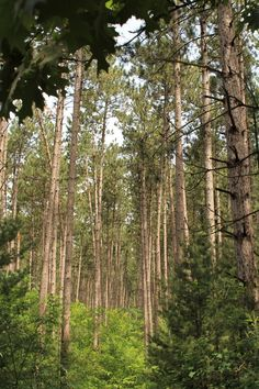 10 must do hikes in WI