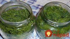 Táto bylina je hotovým pokladom pre vaše zdravie aj kuchyňu. Tatko vám vydrží čerstvá celé mesiace! Russian Recipes, Fresh Green, Alternative Medicine, Herbal Medicine, Seaweed Salad, Kitchen Hacks, Cucumber, Herbalism, Cabbage