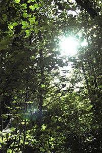 La forêt ramène presque toujours, chez la personne qui y pénètre, une notion de différence entre l'ici et l'ailleurs. Elle marque la limite spatiale entre la colonisation du territoire par l'Homme et la nature sauvage. La mythologie romaine souligne à cet effet que les Enfers étaient protégés du monde par la présence de forêts sacrées le long du fleuve Styx, lesquelles furent destinées à la destruction par des soldats romains.