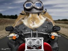 Another Easter Bunny rider!!! Hope you are all having a great weekend!!!