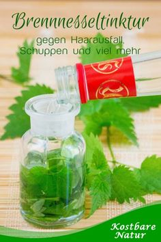 Healing nettle tincture for hair loss, dandruff Heilsame Tinktur aus Brennnesseln gegen Haarausfall, Schuppen und mehr The nettle is an underrated medicinal plant! As a tincture, it can alleviate hair loss and dandruff and promote blood circulation. Hair Dandruff, Dandruff Remedy, Natural Hair Growth Remedies, Hair Loss Remedies, Aloe Vera, Natural Gel Nails, Oil For Hair Loss, Nail Growth, Natural Treatments