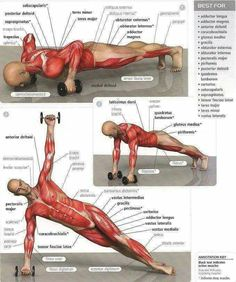 Dumbell pushups exercises and the muscle group each exercise works. #virileman5