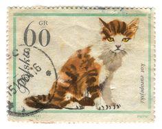 Poland Postage Stamp: Cat | Karen Horton Flickr #cat #stamp #Poland #illustration