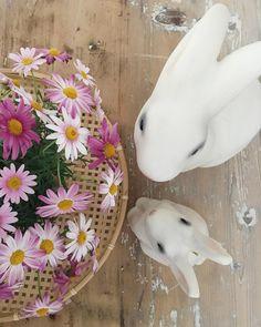 Joyeuses Fêtes de Pâques ! #paques #fetesdepaques #joyeusespâques #easter #happyeaster #lapin #rabbit #flowerpower #pinkflowers #anthemis #tirelire