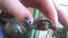 Baby turtle Baby Turtles, Tortoises, I Am Awesome, Friends, Cute, Animals, Amigos, Turtles, Animales