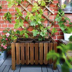 Jardines, balcones y terrazas se preparan para recibir a la primavera con sus mejores galas.