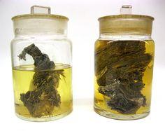 Berezovka Woolly Mammoth Flesh in a Jar