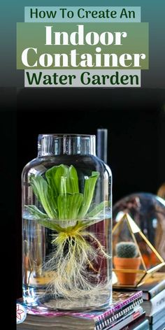 Indoor water gardens are a fun and unique way to display aquatic pond and aquarium plants in your home. We will cover some design tips and also talk about which aquatic plants are best for indoor containers and will thrive without soil.