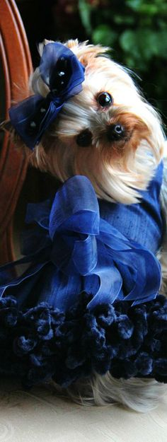 Pampered Pets   House of Beccaria~