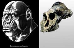 """Paranthropus aethiopicus - WT-17000 - """"Black Skull"""" - reconstruction by Eduard Olaru"""