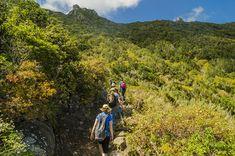Senderismo, Tenerife, Islas Canarias // The best hiking trails in Tenerife: Tenerife Walking Festival Canary Islands // Wandern auf Teneriffa, Kanarische Inseln Canary Islands, Tenerife, Hiking Trails, Walking, Trekking, Teneriffe, Walks, Walking Paths, Hiking