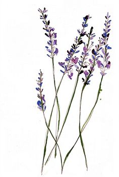 Lavender flowers illustration by Sarah Beetson  Puzzle piece blooms?