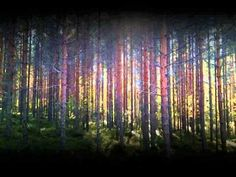 Somnam - Whispering trees Electronic Music, Fields, Trees, Tree Structure, Wood