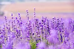 How To Use Aromatherapy To Bliss Out Your Home - mindbodygreen.com