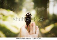 https://www.shutterstock.com/image-photo/vibrant-photo-hand-holds-pine-cone-741701245?src=sQkdHFdScyVrNoJqwVT8kg-1-2