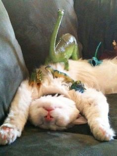Best way to prank on your sleeping cat, by far, is to cover him or her with dinosaurs. A picture made for the internet. RAWR.
