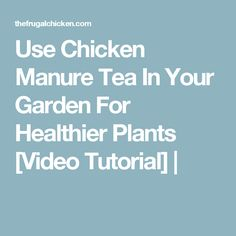Use Chicken Manure Tea In Your Garden For Healthier Plants [Video Tutorial] |