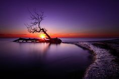 Tree In The Lake by Bradley P Smith