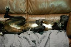 TIA Greyhound Rescue