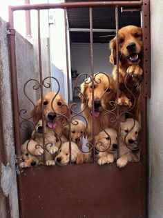 This is how you'll be greeted at every gate. | 19 Pictures Of What Heaven Looks Like, Probably