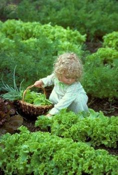 Little girl picking lettuce at the Garden how adorable