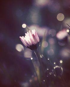 Confetti drops   #mextures #mexturez_delight #mode_emotive #inthemoodfor_macro #moodynature #infinity_macro_details #tv_flowers #the_gallery_of_magic #heart_imprint #global_ladies #rsa_mextures #iheartnature #filthyflora #bokeh_kings #romantic_darkness #jj_moodyhues #naturehippys #jj_indetail #creativeflow_graphics #versatile_photo_ #flowersandmacro #vzcomacro #fingerprintofgod #fiftyshades_of_nature #fotofanatics_macro_ #everything_imaginable #splendid_flowers #dof_brilliance…