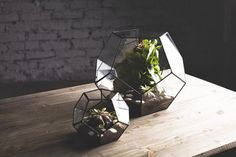 glass terrarium little dodecahedron by boxwoodtree on Etsy
