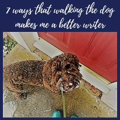 7 ways that walking the dog makes me a better writer.