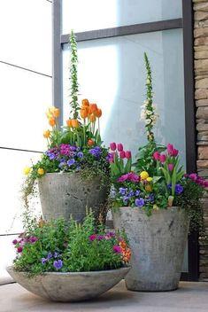 so beautiful. i wish tulips lasted longer.