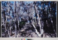 © Fiona Greenhill 'Cliff Walk, Tasmania', 2010, Oil and acrylic on canvas, 122 x 183cm #tree #art