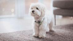 puppy gifs - Buscar con Google