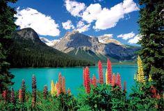(2018) Emerald Lake and Canadian Rockies  - 1000 pcs