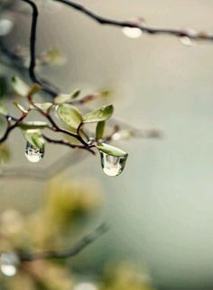 Rain Days, Drip Drop, Spring Awakening, Dew Drops, Water Droplets, Spring Sign, Spring Green, Natural World, Photos