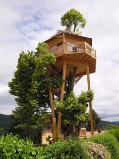 The Green Life Tree house Building A Treehouse, Treehouse Ideas, Trees Top View, Cool Tree Houses, Tree House Designs, Tree Tops, House In The Woods, Play Houses, Cob Houses