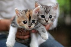 Kittens are so sweet
