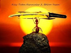 Kılıç Tutan Karıncalar 'İnsan'