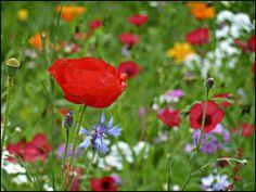 Blumenwiese http://fc-foto.de/27548893