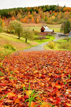 Fall in Vermont, had this picture on my fridge for years