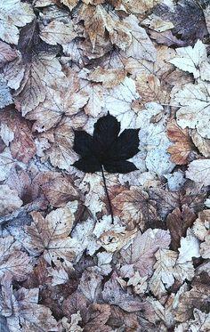 herfst met de vele bladeren