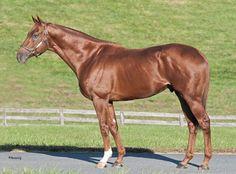 Grade 1 Winner Dortmund Arrives At Bonita Farm - Horse Racing News Big Brown, Mane N Tail, Danzig, Racing News, Horse Racing, Race Horses, 5 Year Olds, Horse Farms, Thoroughbred
