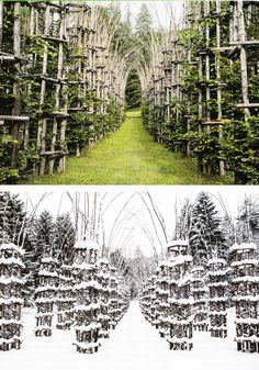 Giuliano Mauri's Cattedrale Vegetale.  Wish this was in my back yard!