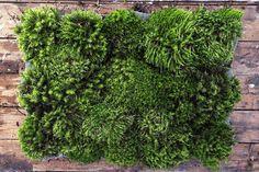 Зелений килимок з натурального моху. Можна використовувати як килимок для ванної кімнати або просто як елемент декору. Добре знімає стрес та напруження.