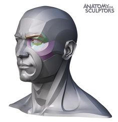 Uldis Zarins is raising funds for Form of The Head and Neck - by Anatomy For Sculptors on Kickstarter! Form of The Head and Neck. This is human anatomy for artists. Making Anatomy Visual And Understandable! Facial Anatomy, Head Anatomy, Human Body Anatomy, Anatomy Art, Anatomy Drawing, Anatomy Books For Artists, Facial Expressions Drawing, Anatomy Sculpture, Anatomy Models