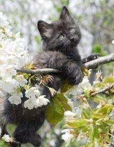 J'ai réussi à grimper dans le cerisier, et bientôt,  je jouerai avec ses petites boules rouges...